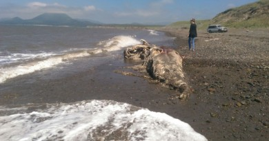 Sachalino pakrantėje rasti dar vienos neidentifikuotos jūrų pabaisos palaikai