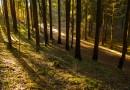 Pardavusieji medieną ar nenukirstą mišką mokestį turi sumokėti iki liepos 15-osios