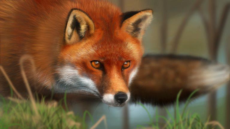 Informacija dėl laukinių gyvūnų vakcinacijos prieš pasiutligę
