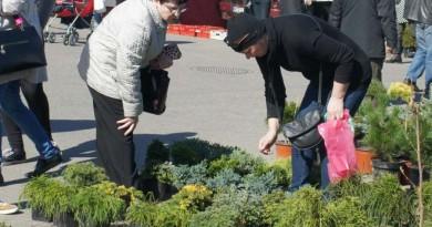 pavasario mugė sodinukai prekyba
