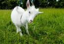 Kviečiame teikti paraiškas dėl valstybės pagalbos ūkiniams gyvūnams įsigyti