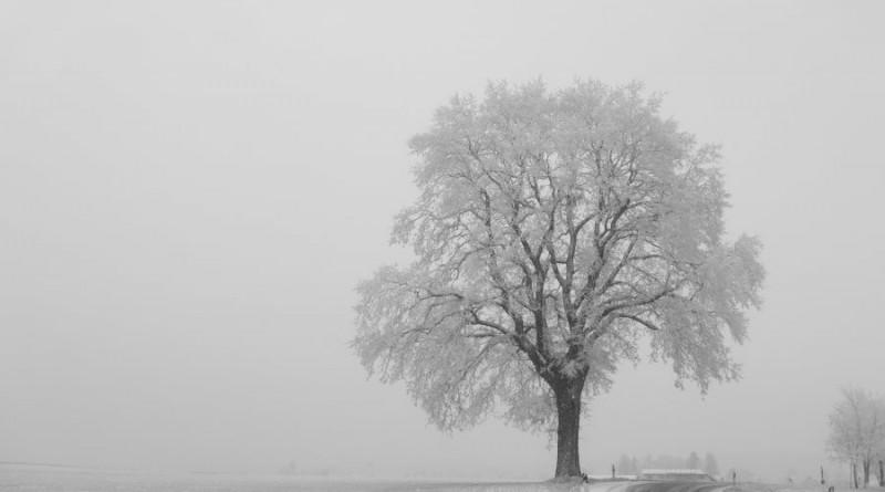 rukas-ziema-medis