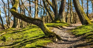miškas gamta medžiai pavasaris