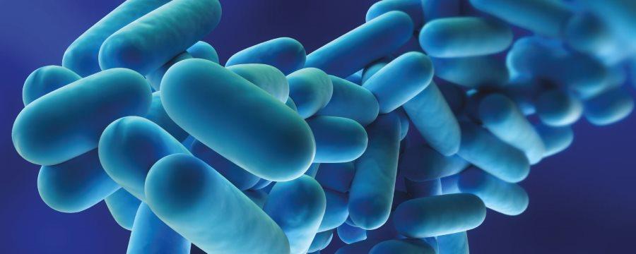 legionella legionelės bakterija legioneliozė