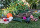 Žemės ūkiui – ketvirtis milijardo eurų paramos: skatins auginti daržoves, o ne grūdus