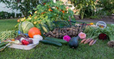 Šviežios daržovės – ir maistas, ir vaistas