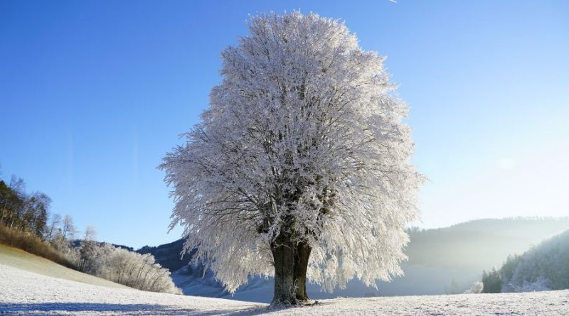 žiema sniegas medis gamta šalna
