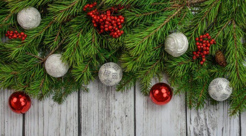 Kalėdos eglės šaka