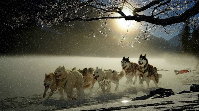 šunys šuo žiema